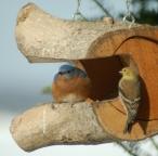 backyardbirdsbybrucestambaugh