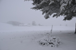 snowfarmbybrucestambaugh