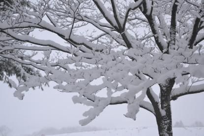 snowbranchesbybrucestambaugh