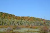 wetlandsandwoodlandsbybrucestambaugh