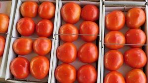 tomatoesbybrucestambaugh