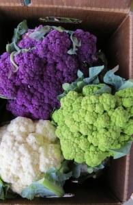 cauliflowerbybrucestambaugh