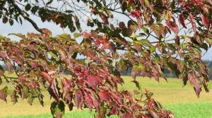 Dogwood berries by Bruce Stambaugh