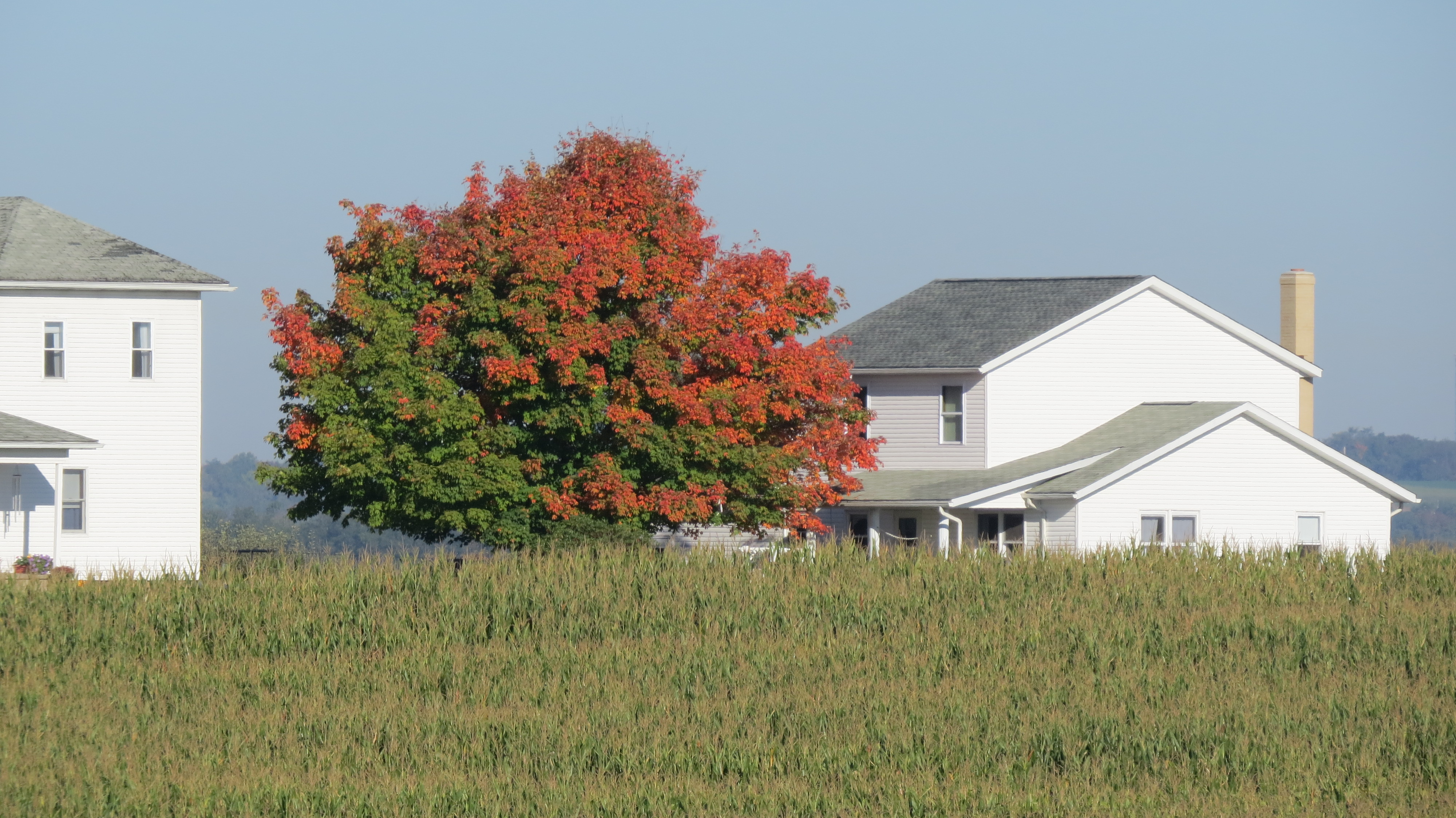 Changing leaves by Bruce Stambaugh