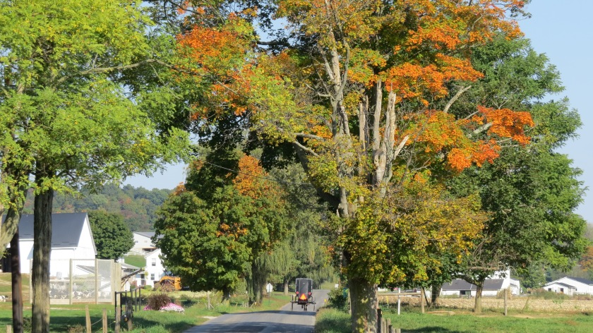 Amish buggy fall leaves by Bruce Stambaugh