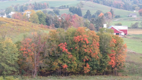 Colorful leaves Holmes County Ohio by Bruce Stambaugh
