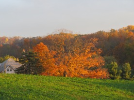 fall colors, sugar maple, Holmes County Ohio, Bruce Stambaugh