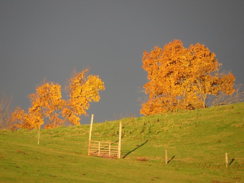 farm gate, fall colors, hillside