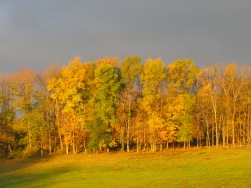 fall colors, colorful leaves, treeline, Bruce Stambaugh