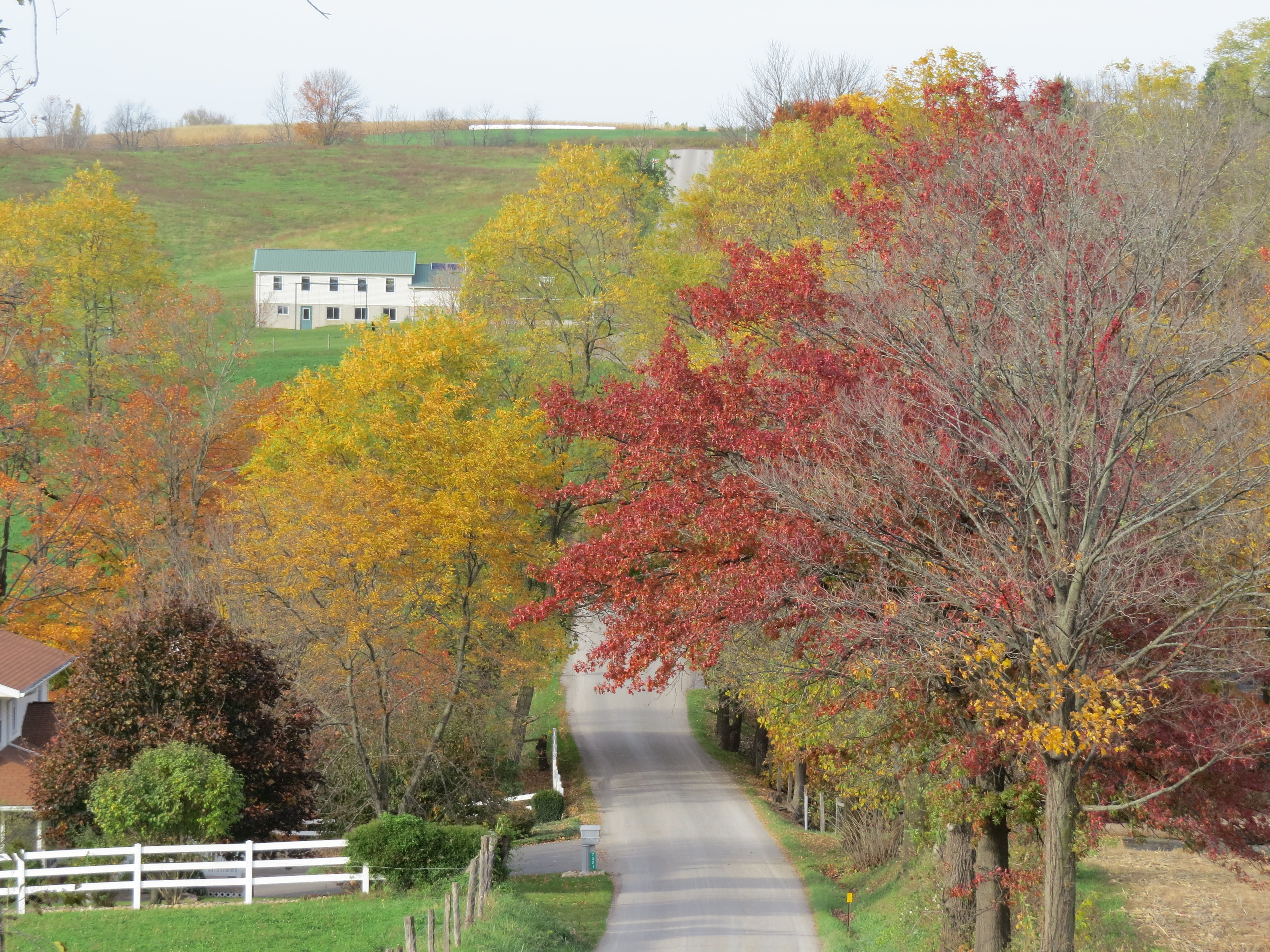 fall colors, changing leaves by Bruce Stambaugh