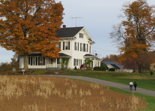 Amish couple, Holmes County Ohio, autumn leaves, country scene