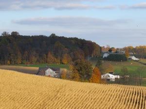 cornfield, Amish County, brittle corn stalks