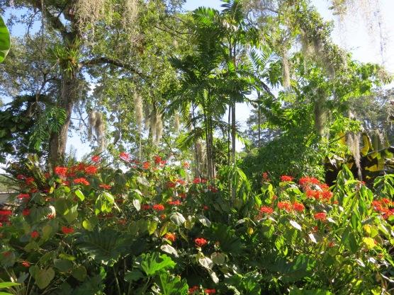 Selby Botanical Gardens, Sarasota Florida