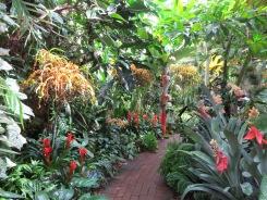 Selby Botanical Gardens, Sarastoa Florida