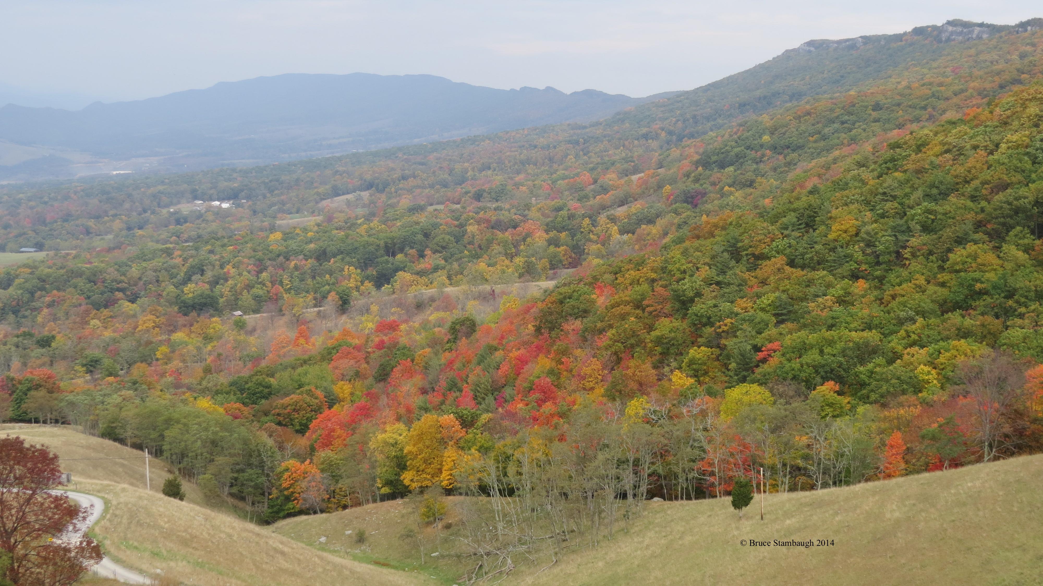 West Virginia, ginseng hunting,