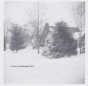 Christmas decoration, pine tree