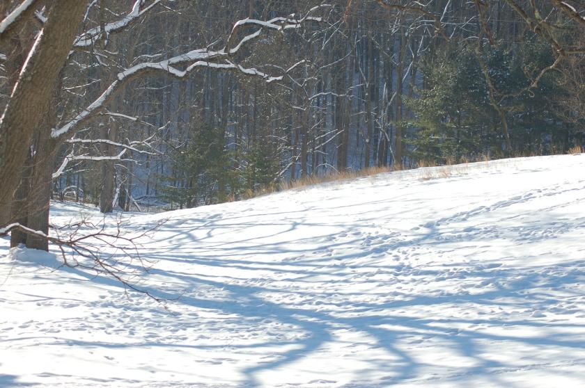 shadows, winter