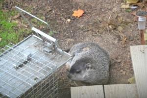 groundhog, Bruce Stambaugh