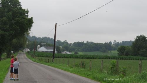 Amish farm, walking