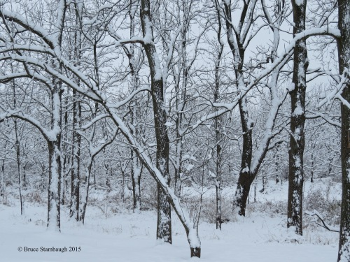 snowy woods, winter woods