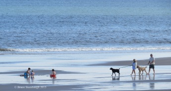playing on the beach, walking dogs on the beach