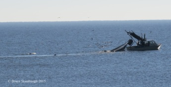 fishing trawler, dolphins, gulls