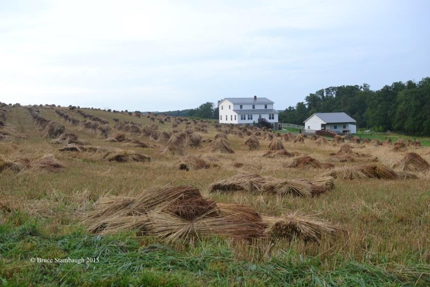 wheat shocks, striaght line wiind damage