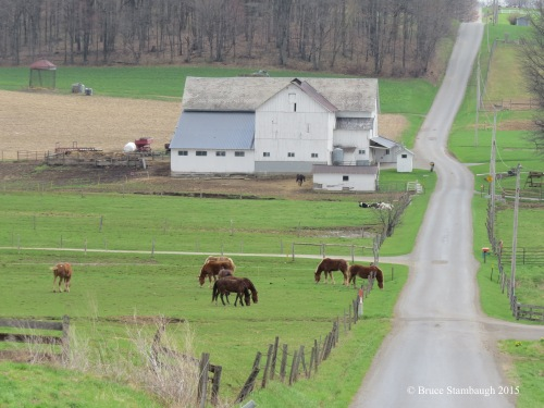 Amish country, horses,