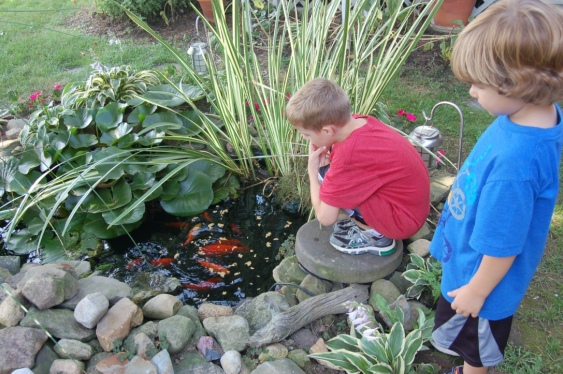 feeding goldfish