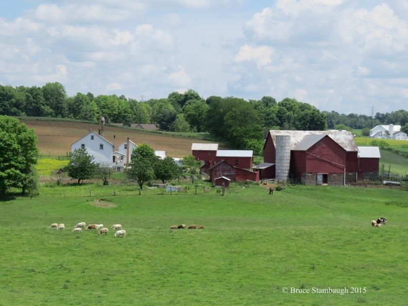 pastoral scene, Holmes County Ohio, sheep grazing