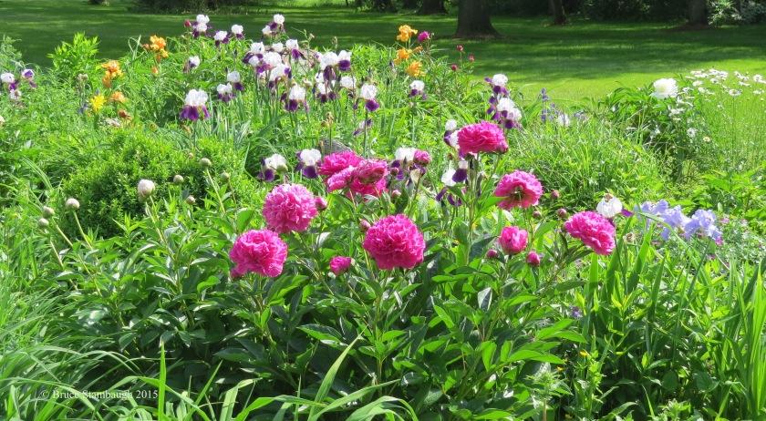 summer flowers, flower gardens