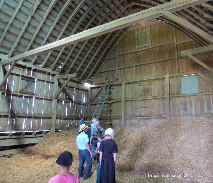 baby birds, Amish barn, climbing the ladder