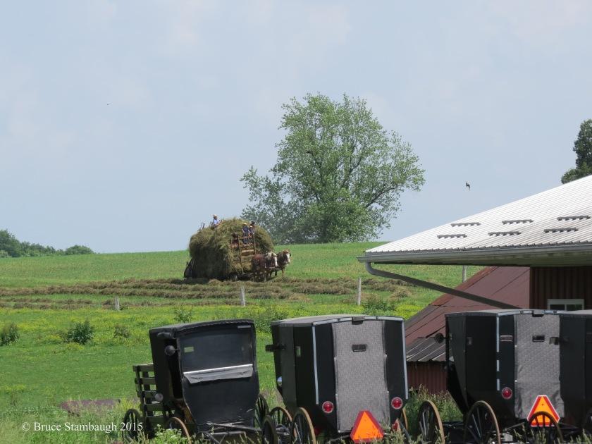 haying, making hay