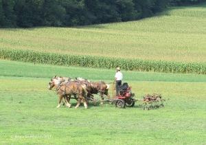 fluffing hay, teddering hay