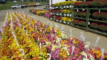mums, produce auction