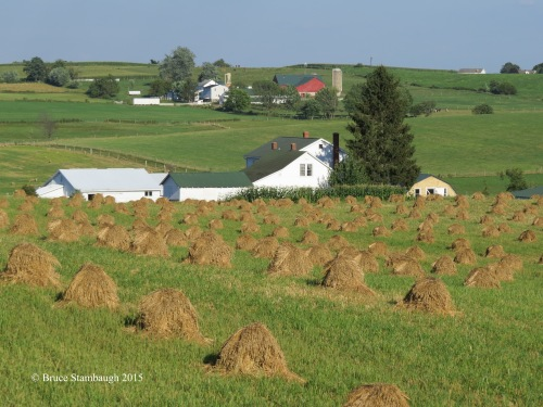 bird habitat, Ohio's Amish country