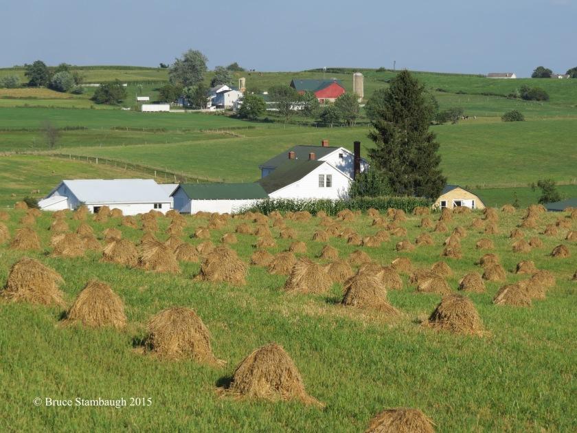 bird habitat, Ohio's Amish country