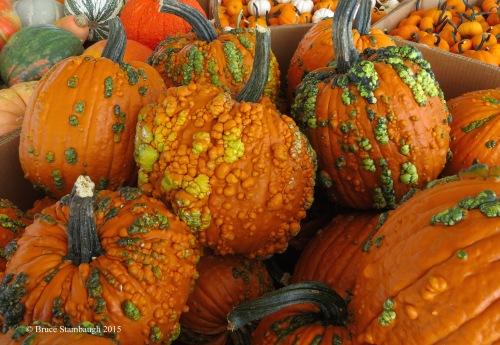 gourds, pumpkins