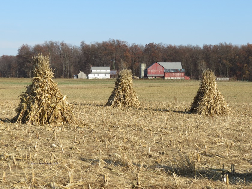 corn shocks, Amish farm