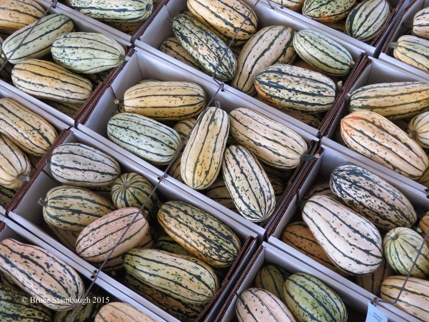delicata squash, squash, farmers produce auction