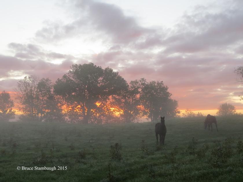 horses, sunrise