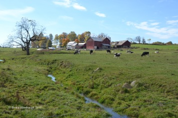 pastoral scene, Amish country