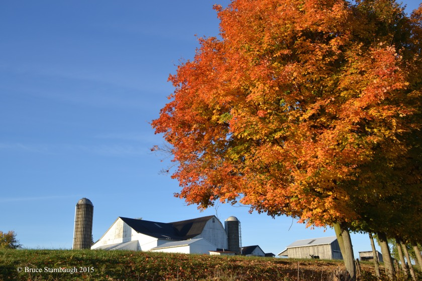 Amish farm, autumn, colorful leaves