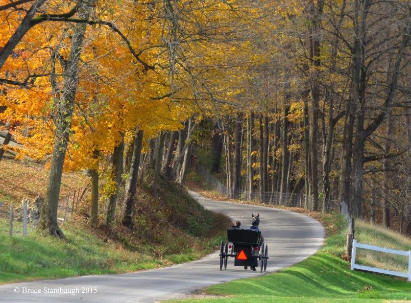 boys in Amish buggy