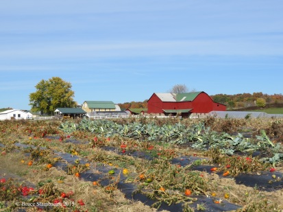 Amish produce farm