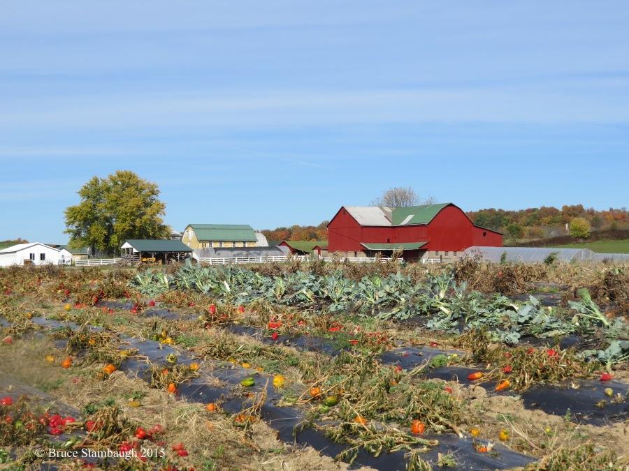 Amish produce farm