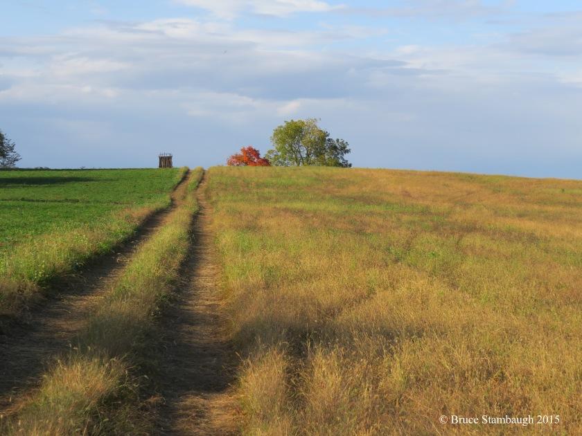 farm lane, farm field