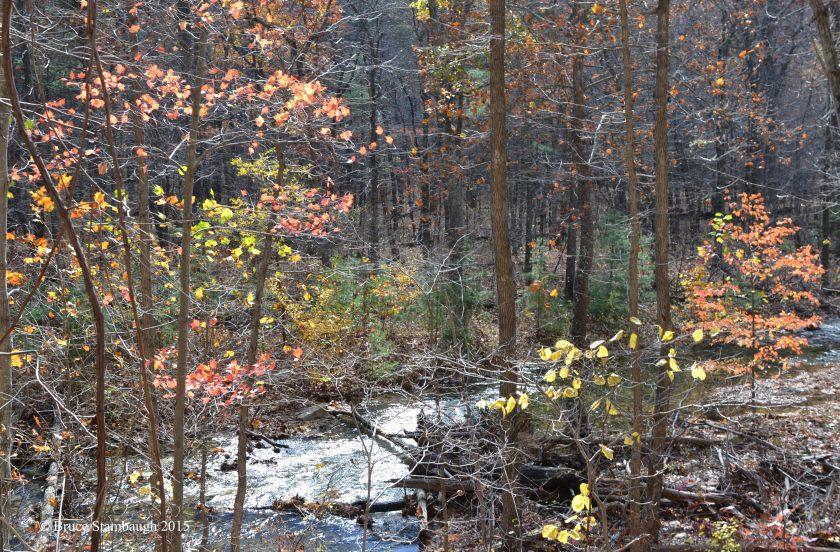 autumn leaves, back lighting