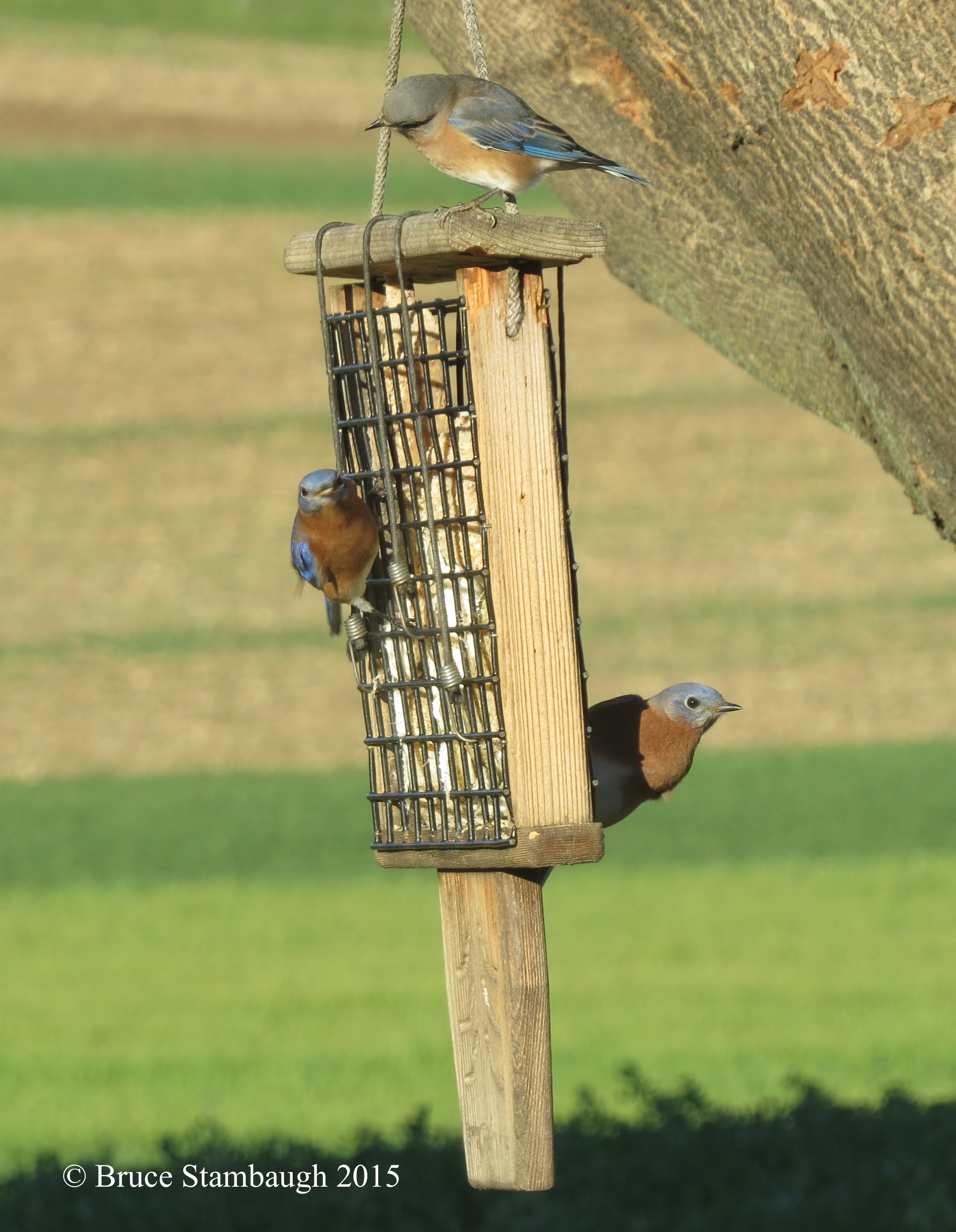 zoom bird feeder copper brushed feeders duncraft blue oriole com