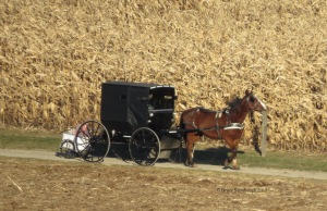 Amish buggy, Christmas presents